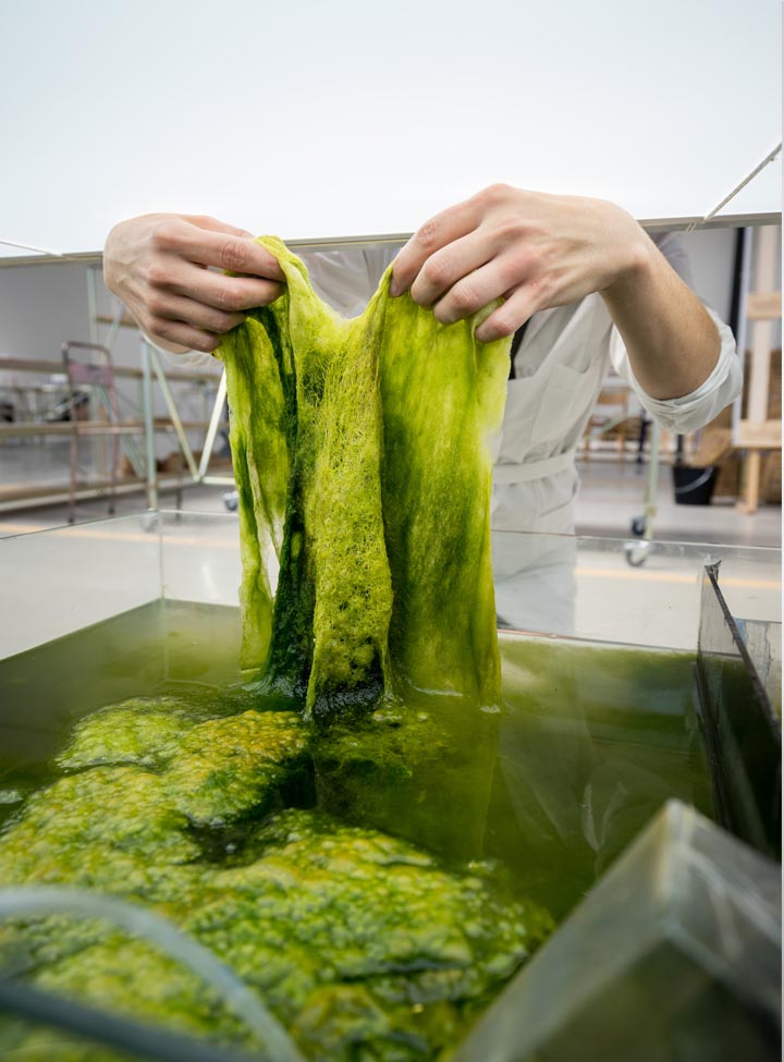 Algae Lab at Atelier LUMA, Studio Klarenbeek & Dros